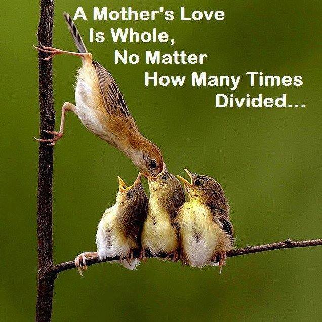 Mother love-1