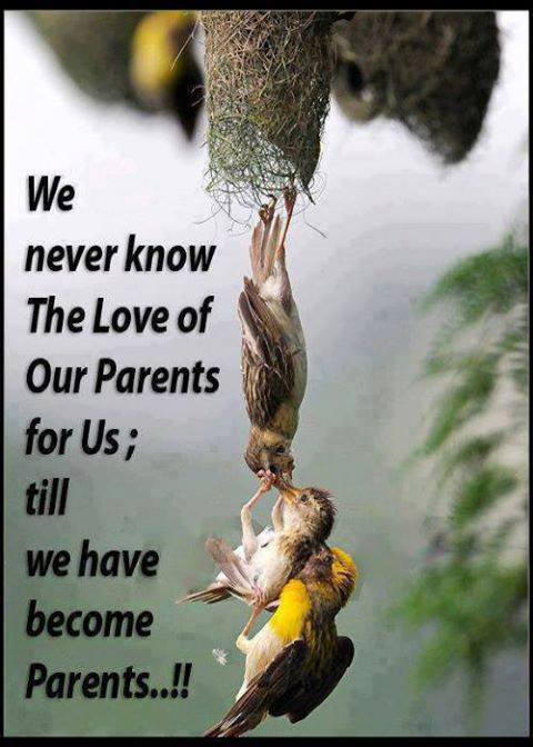 parents' love